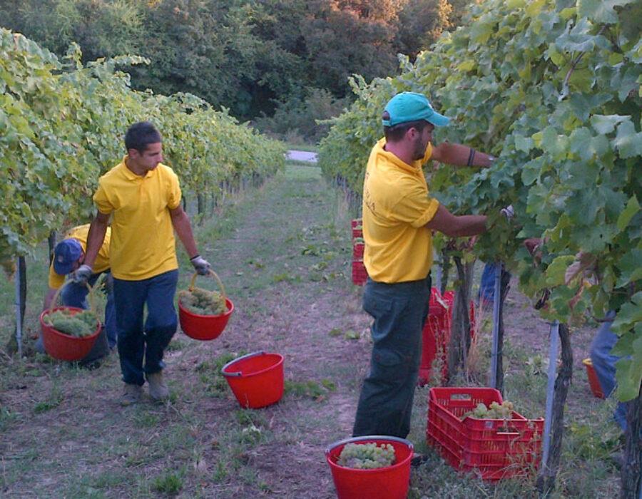 I vini di Fluò@HOME – Società Agricola Terraquilia