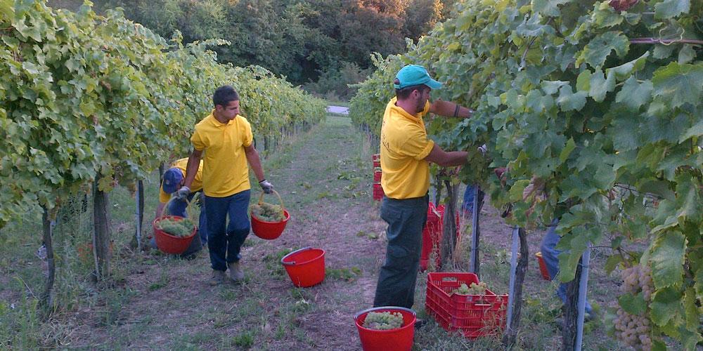 I vini di CHEF@HOME – Società Agricola Terraquilia